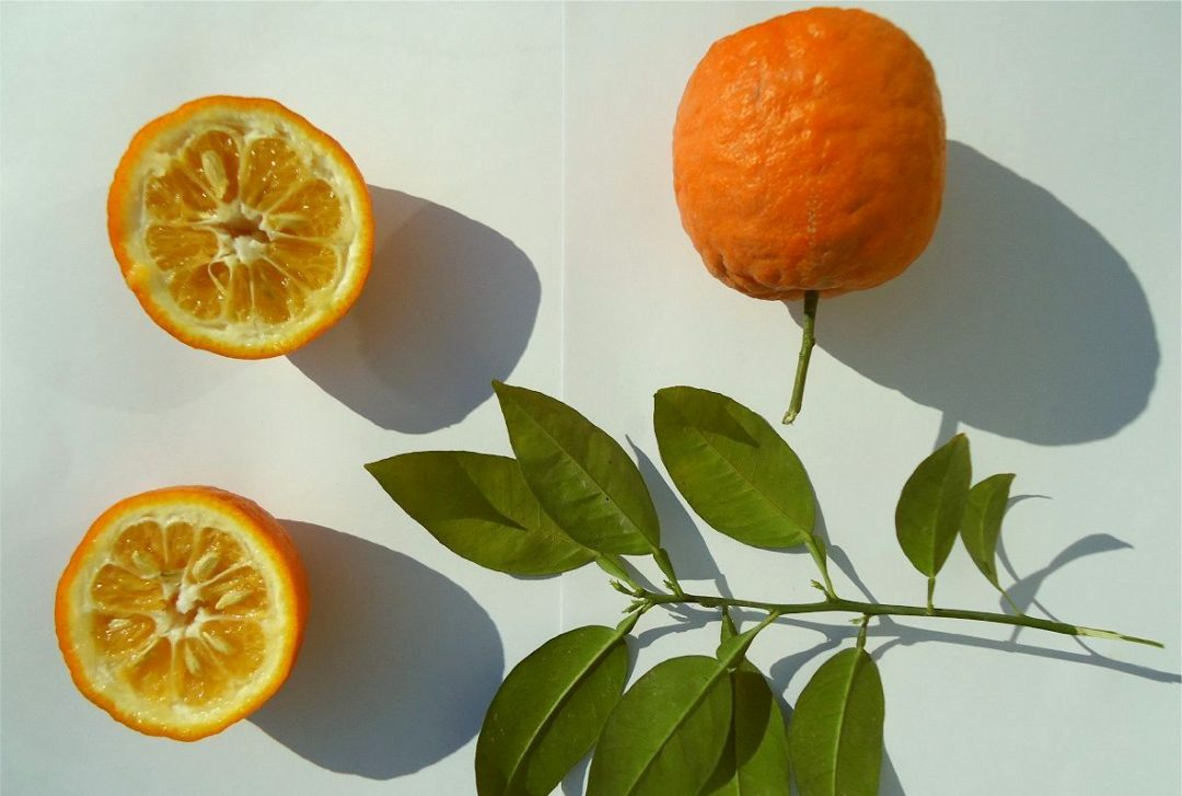 خواص وارزش غذایی نارنج
