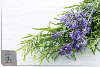 درمان آرتروز با گیاهان دارویی