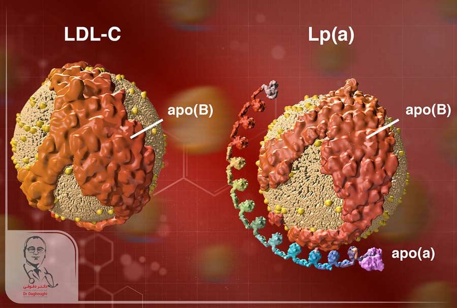 لیپوپروتئین-آ Lipoprotein (a) چیست؟